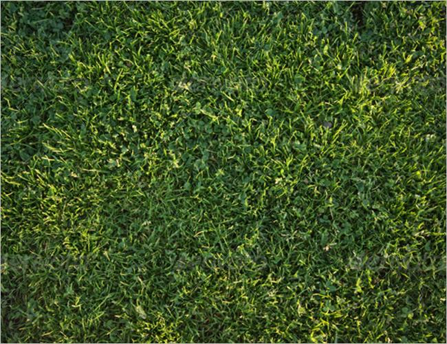 Grass Texture Photoshop Design