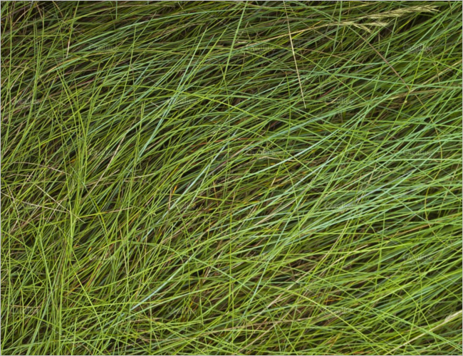 Green Grass Texture Design