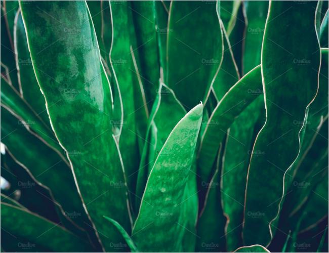 Greenary Texture Design