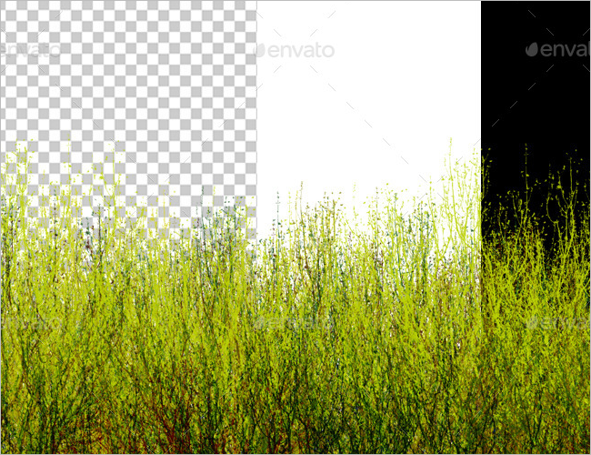 Isolated Grass Texture Design