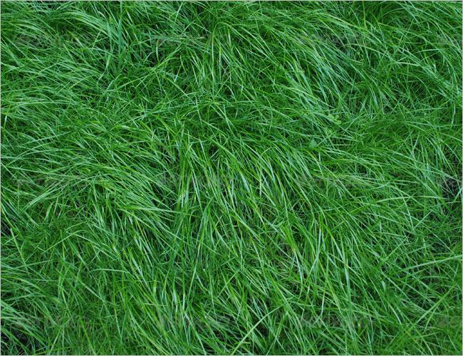 Outdoor Grass Texture Design