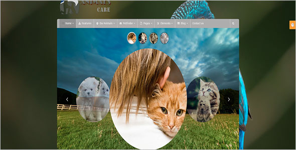 Animal & Pet Bootstrap Template