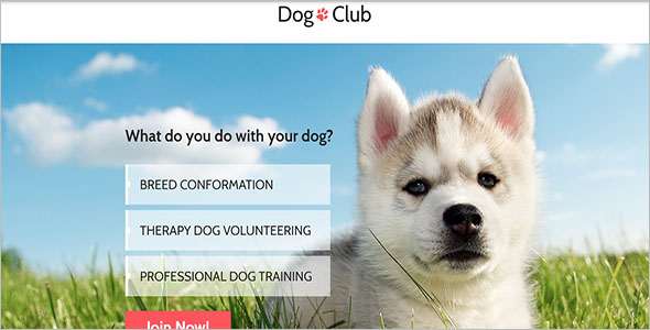 Cat Club Bootstrap Template