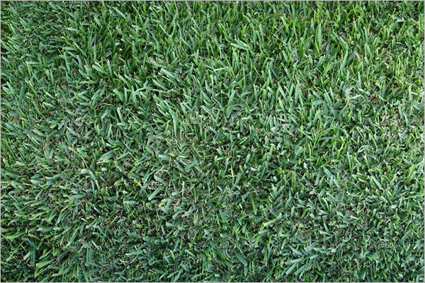Best Carpet texture Design