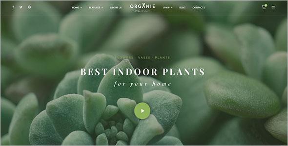 Online Organic Store Magento Theme