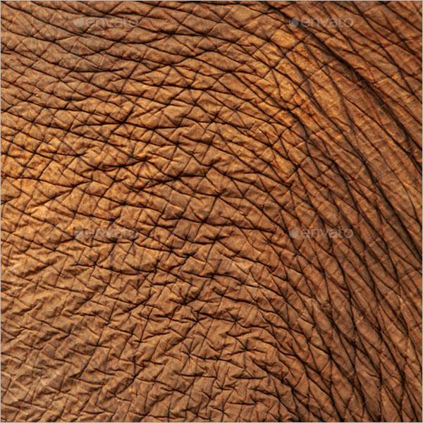 Animal Skin Texture Ideas