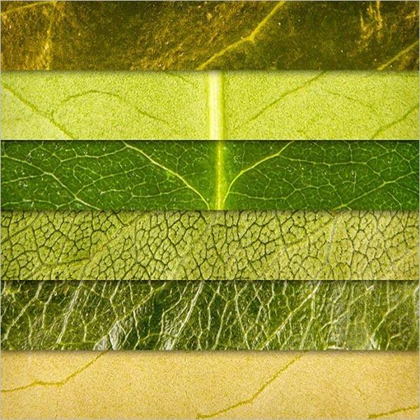 Best Leaf Textures