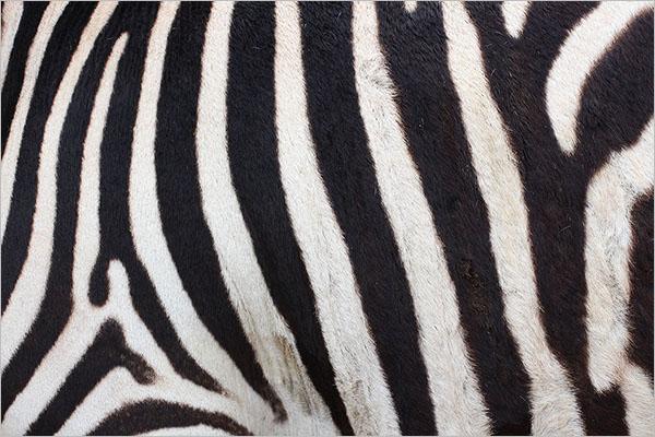 Creative Animal Textures