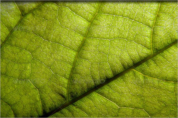 Custom Leaf Textures