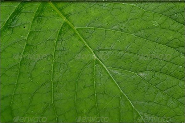 Leaf Texture Seamless