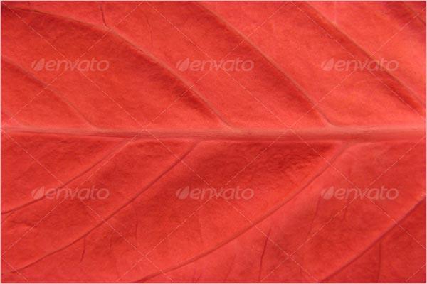 Leaf Textures Bundle