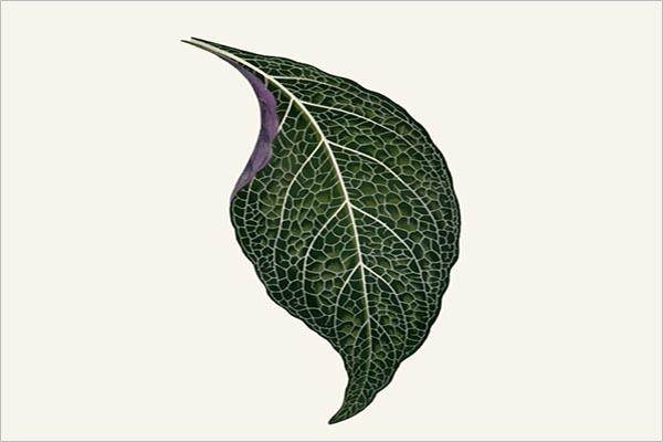 Leaf Textures Free Download