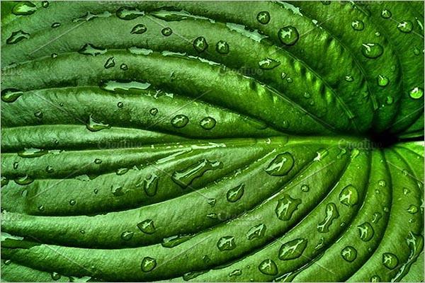 Modern Leaf Textures