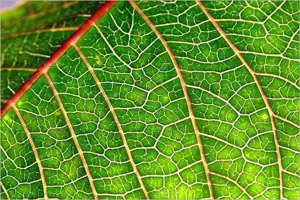 Natural Leaf Textures