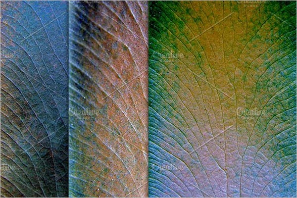 Organic Leaf Texture