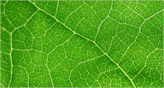 20+ Best Leaf Textures