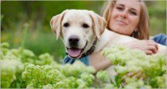 10+ Pet Animals WordPress Themes