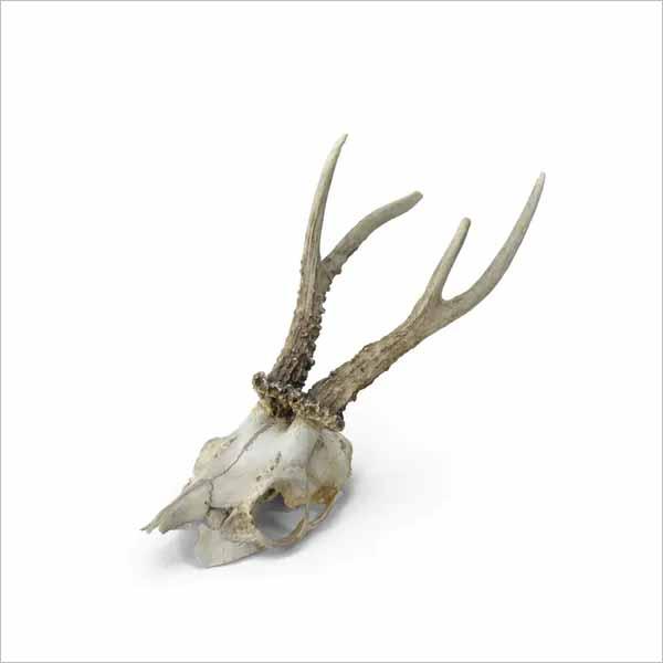 Dear Skull 3D Design