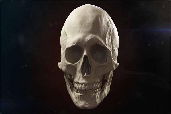 Skull 3D Maya Model