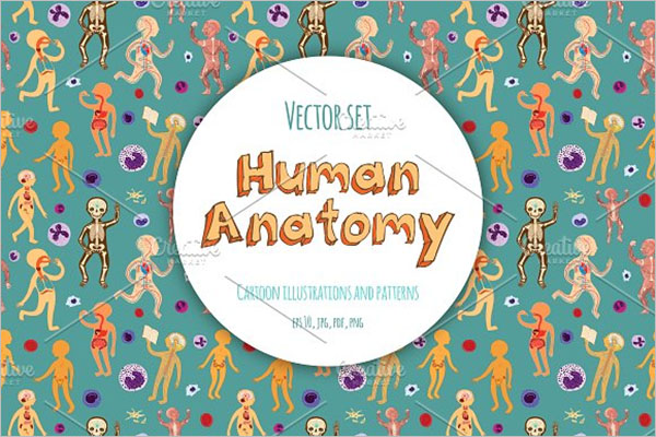 Kids Human Anatomy Postcard Design