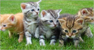 Cat WordPress Themes