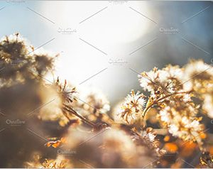 Winter flowers - Morning- sunrise