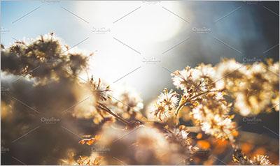 Winter flowers - Morning- sunrise