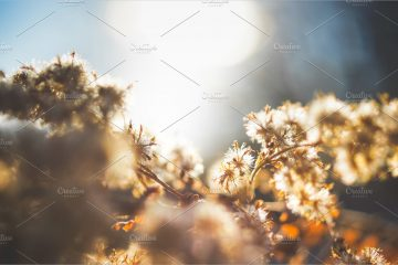 Winter flowers - Morning