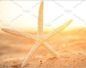 Closeup Starfish On Sand