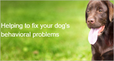 Finest Dog WordPress Themes