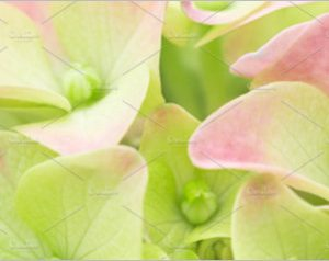 Spring flower pastel background
