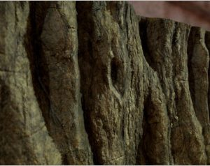 Textures Tree Bark