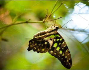 Beautiful butterfly on foliage