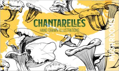 Chantarelles Mushroom collection - Free Download