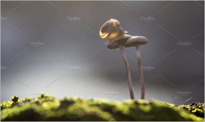 Snail on Mushrooms