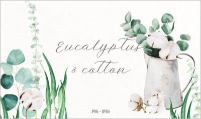 Eucalyptus cotton watercolor set - Free Download