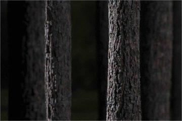 Tree bark texture set