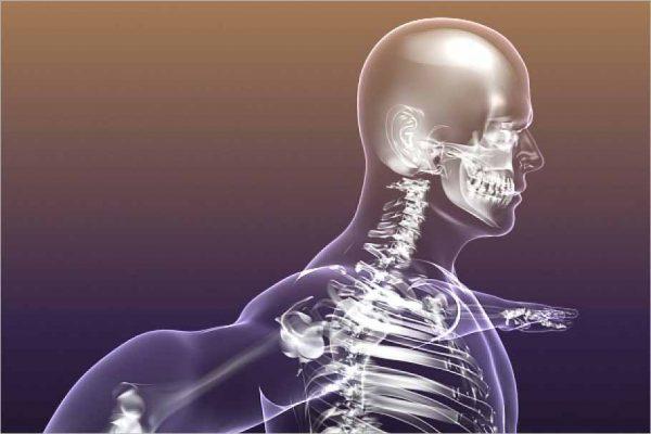Human Skeleton in Body