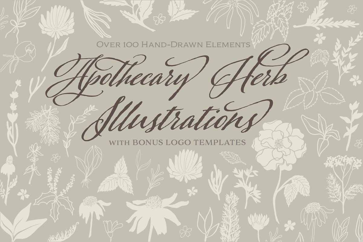 Apothecary Herb Logos Illustration | Graphic Illustration | Creative Template