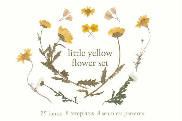 yellow flower set