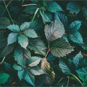 Texture of green leaves